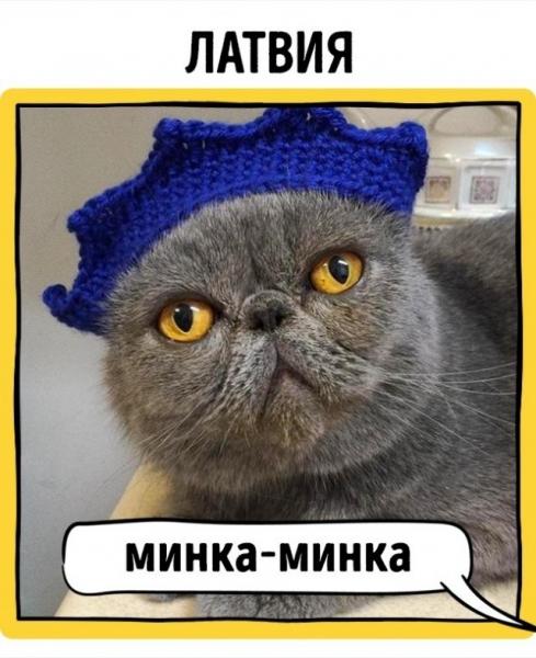 """""""Кошачий язык"""" разных стран (17 фото)"""