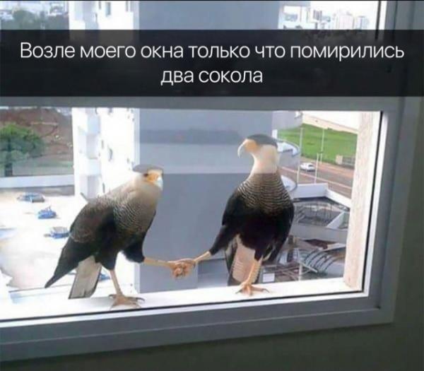 Смешные зверушки (30 фото)