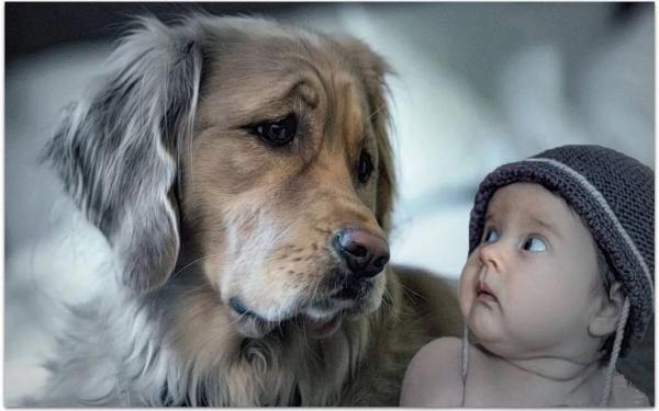 Лучшие друзья во всём мире! (30 фото)