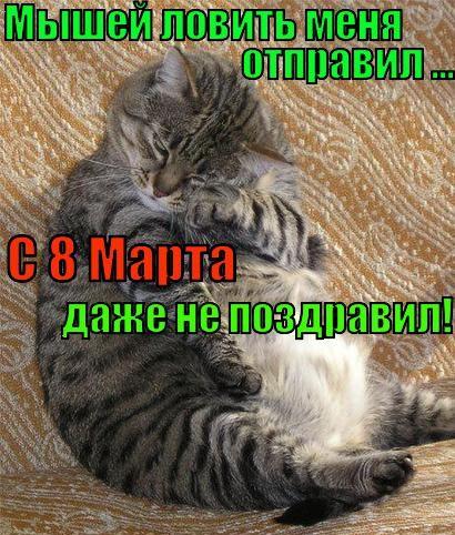 Поздравления от животных с 8 Марта! (25 фото)