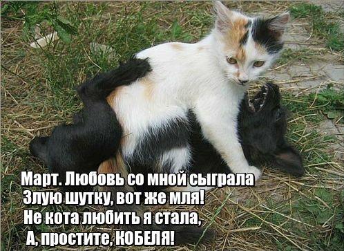 Забавные кошки для хорошего настроения! (30 фото)