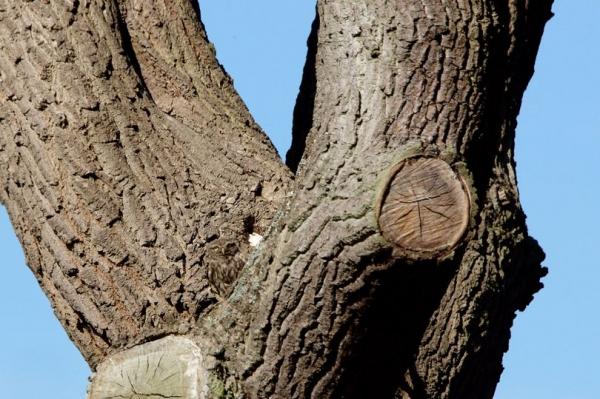 Фотограф сделал снимок совы: Её никто не может увидеть