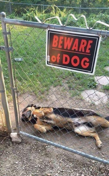 Когда за табличкой «Злая собака» обнаружился сюрприз (33 фото)