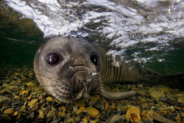Невероятные фотографии животных от Пола Никлена (44 фото)