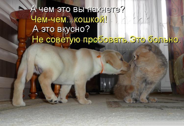 Смотреть смешные картинки про животных с надписями онлайн