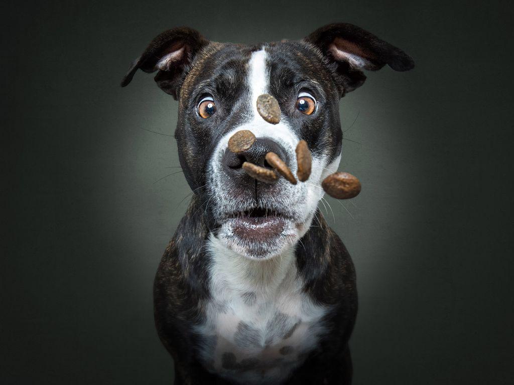 Бешеная собака фото прикол