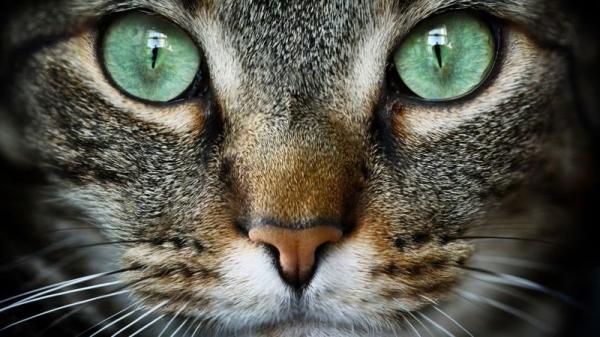50 увлекательных фактов о кошках
