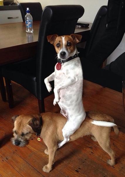 Юмор: 10 домашних животных, которые нарушили все законы логики
