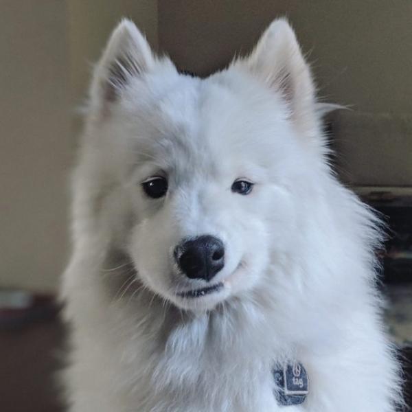 Забавные животные, которые вызовут улыбку и поднимут настроение (30 фото)