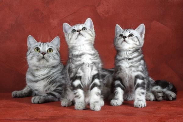 Восхитительные троицы из мира животных (25 фото)