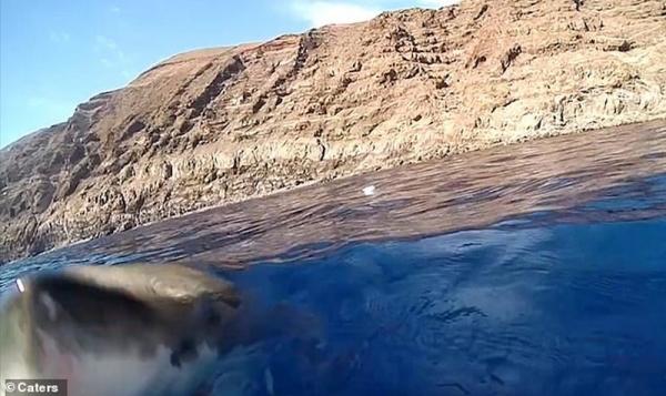 Это интересно: Оператор заглянул в пасть акулы (3 фото)