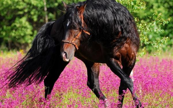 Очаровательные лошади (25 фото)