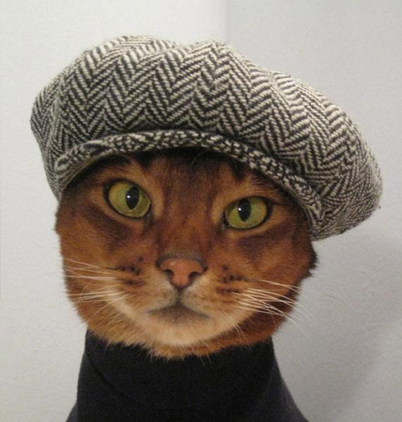 Котикам очень идут головные уборы (30 фото)