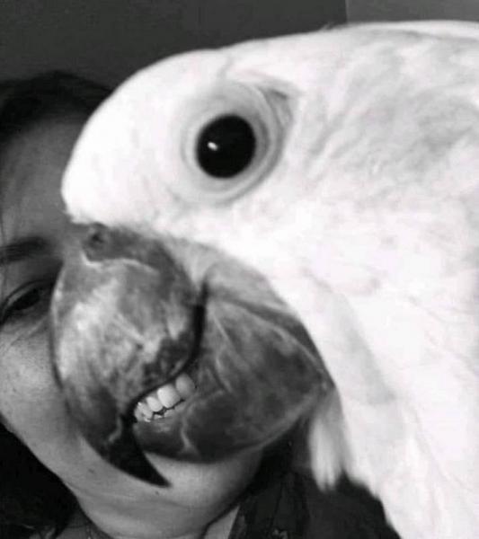 20 фотографий,на которых ракурс решает всё (20 фото)