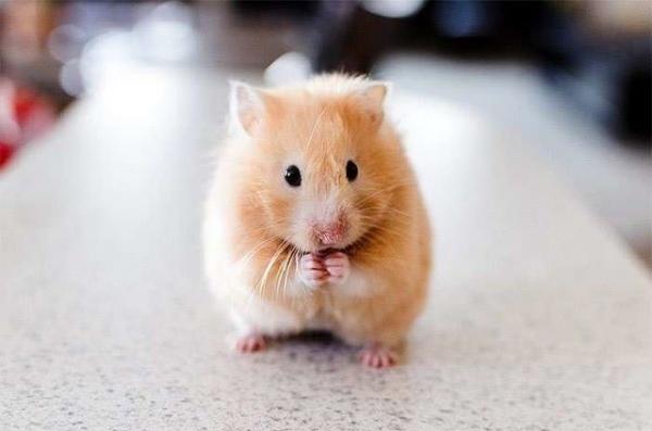 """6 домашних животных, которые """"забирают"""" болезни"""