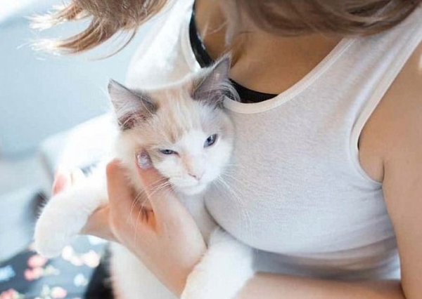 Кошки без ума от женской груди (15 фото)
