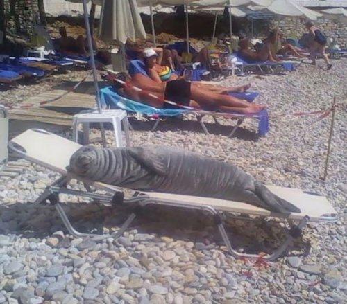 Животные на пляже (11 фото)
