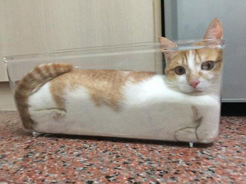Тающие котики (20 фото)