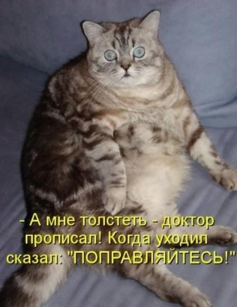 Потешные животные (30 фото)