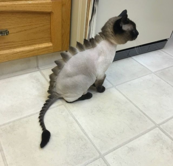 Коты-динозавры (20 фото)