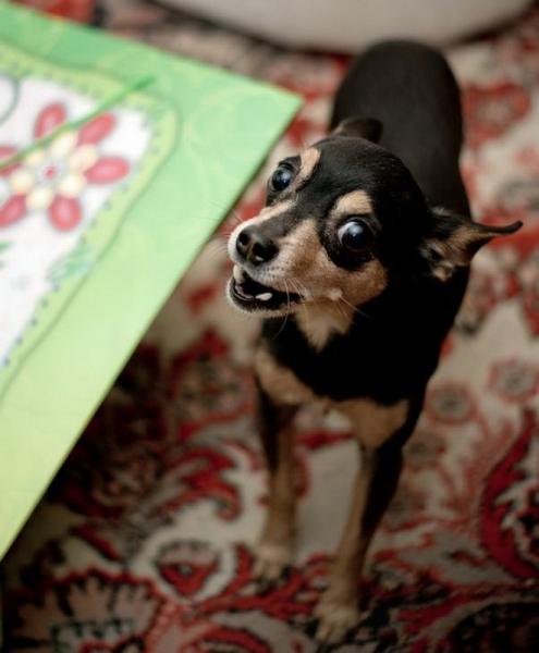 Любителям собачек (30 фото)