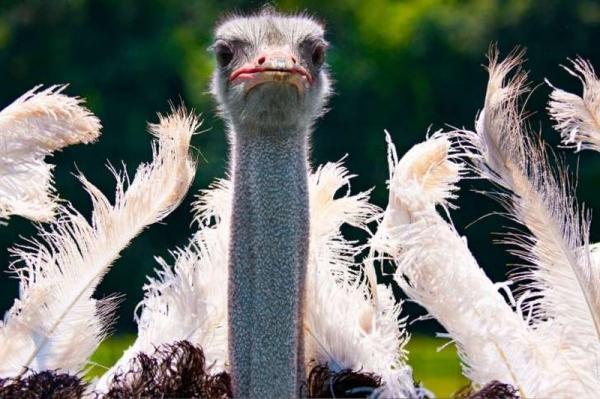 10 интересных фактов о сексе из мира животных