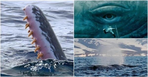 Самое загадочное животное планеты Земля (12 фото)