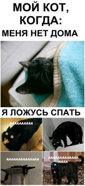 Прикольные картинки с надписями (30 фото)