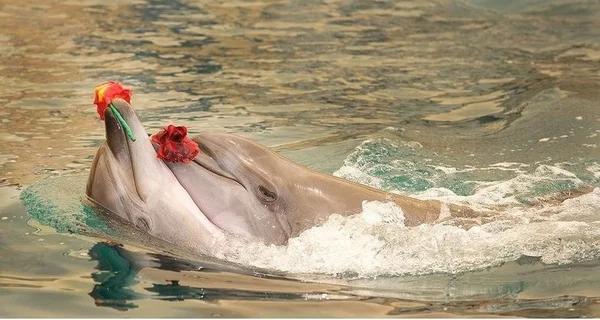 Пять очаровательных подарков, которые животные дарят друг другу в период ухаживания (6 фото)