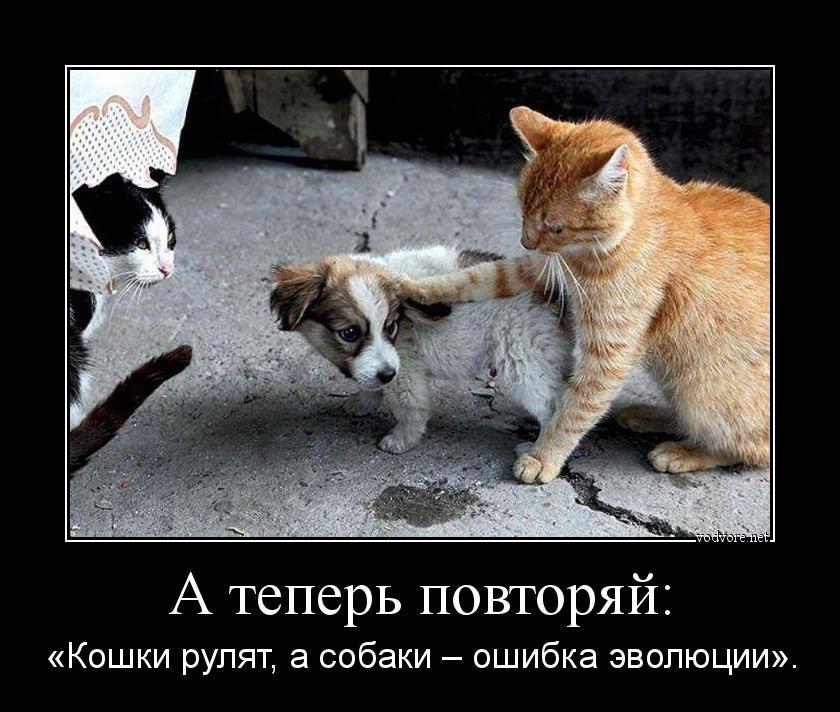 Кошки фото и демотиваторы