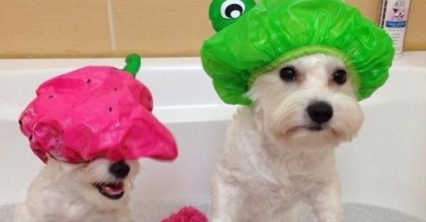 Лайфхаки для владельцев домашних животных