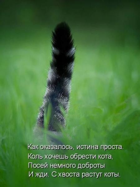 Зоопозитивчик (30 фото)