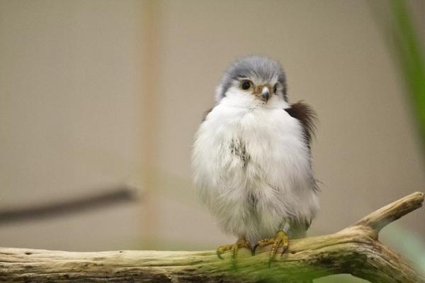 10 птиц и животных, которых вы вряд ли встречали маленькими