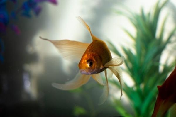 Счастье и рыба