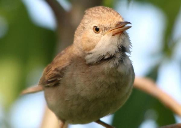 Прекрасный мир птиц (20 фото)
