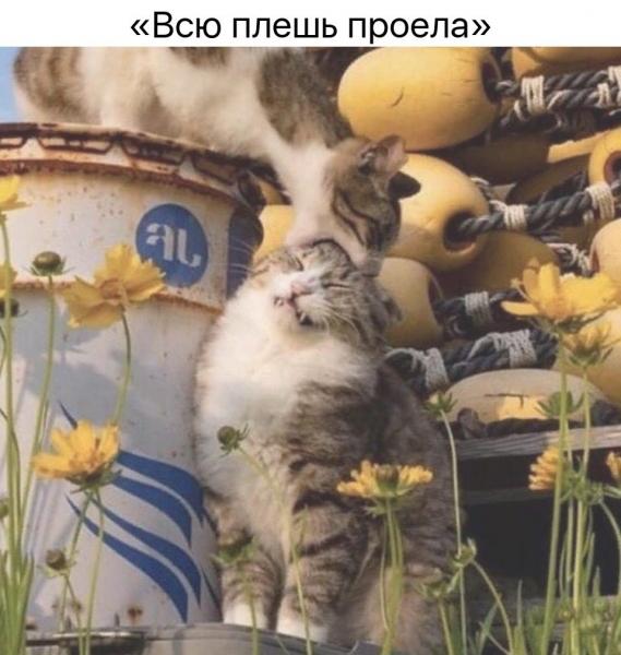 Для хорошего настроения! (30 фото)