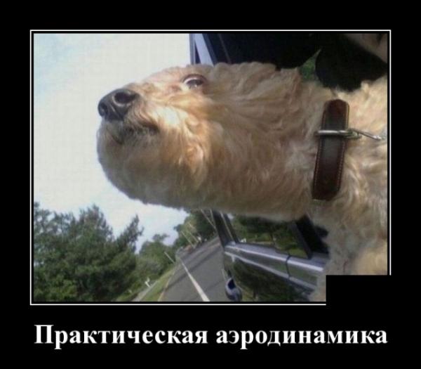 Демотиваторы с животными (30 фото)