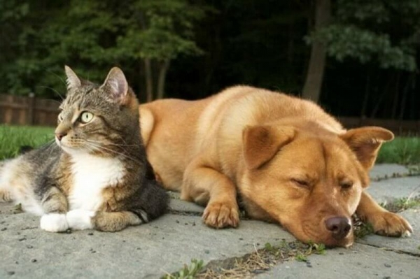 Это интересно: Кто умнее — кошки или собаки?