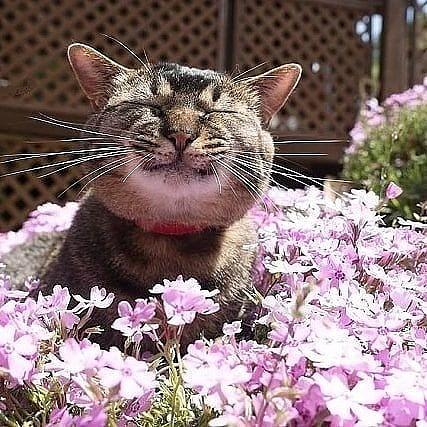 Позитивные картинки для хорошего настроения! (30 фото)