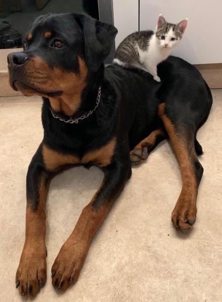 Собаки и кошки в одной обложке (30 фото)