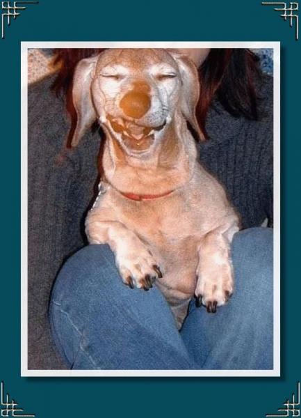 Забавные собаки (26 фото)