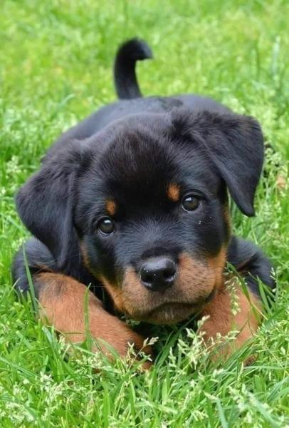 25 очаровательных щенков (25 фото)