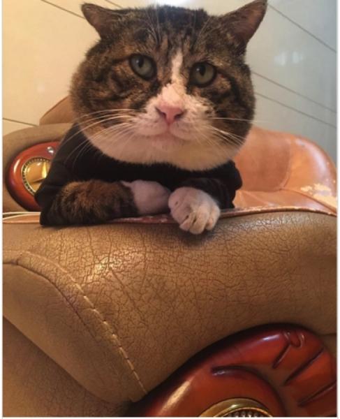 Юмор: Найден самый (не) фотогеничный кот в мире. Кадры с ним уже разбирают на мемы! (23 фото)