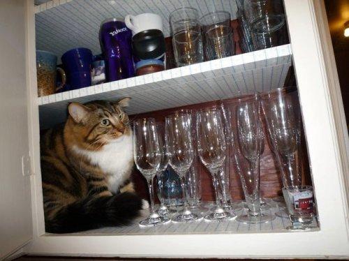 Кошачьи прятки (30 фото)