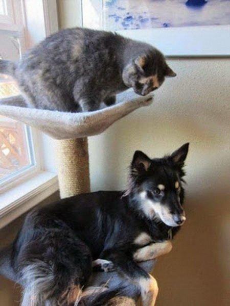 Собаки в роли кошек (21 фото)
