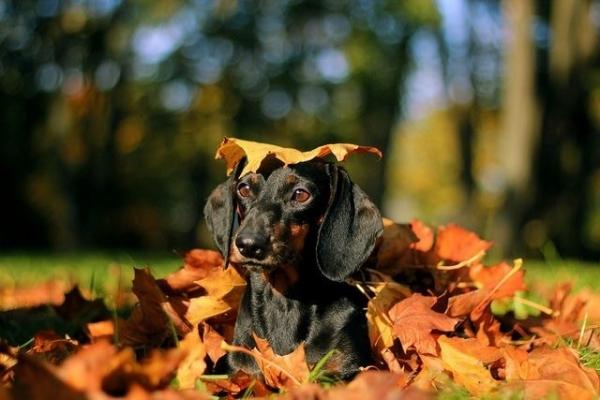 Осенние пёсики (20 фото)