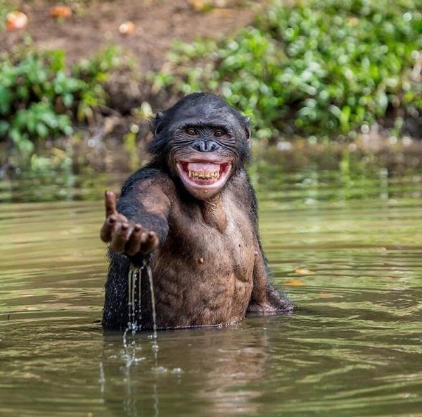 Ну,очень позитивные фотографии животных (30 фото)