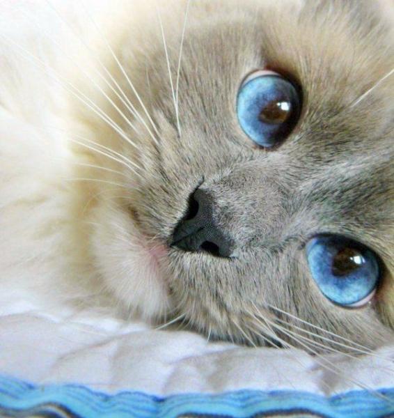 Очаровательные глазки следят за тобой :) (45 фото)