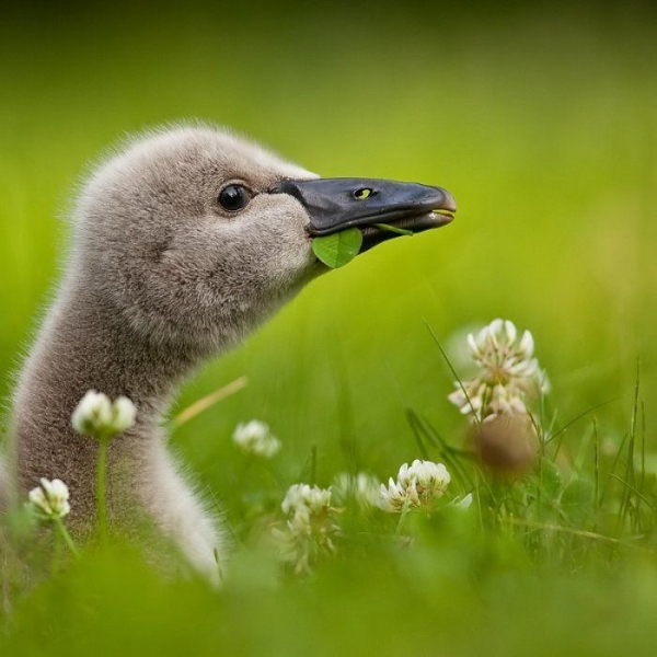Забавные птицы (25 фото)