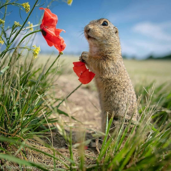 Изумительный мир животных (30 фото)